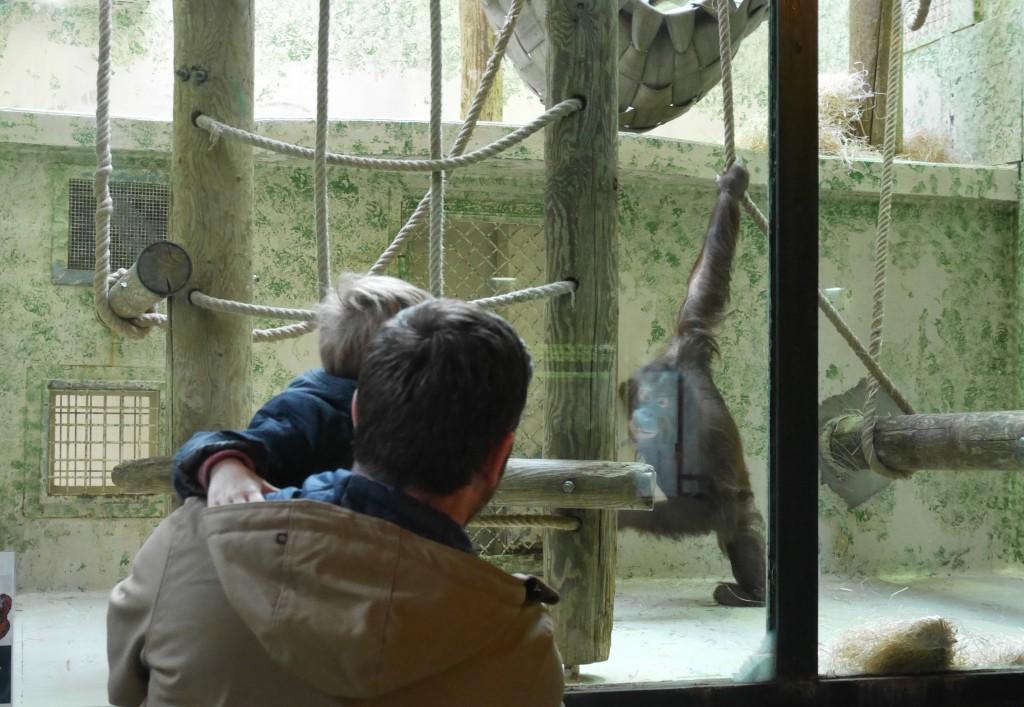 By Paulette x Zoo du Jardin des Plantes